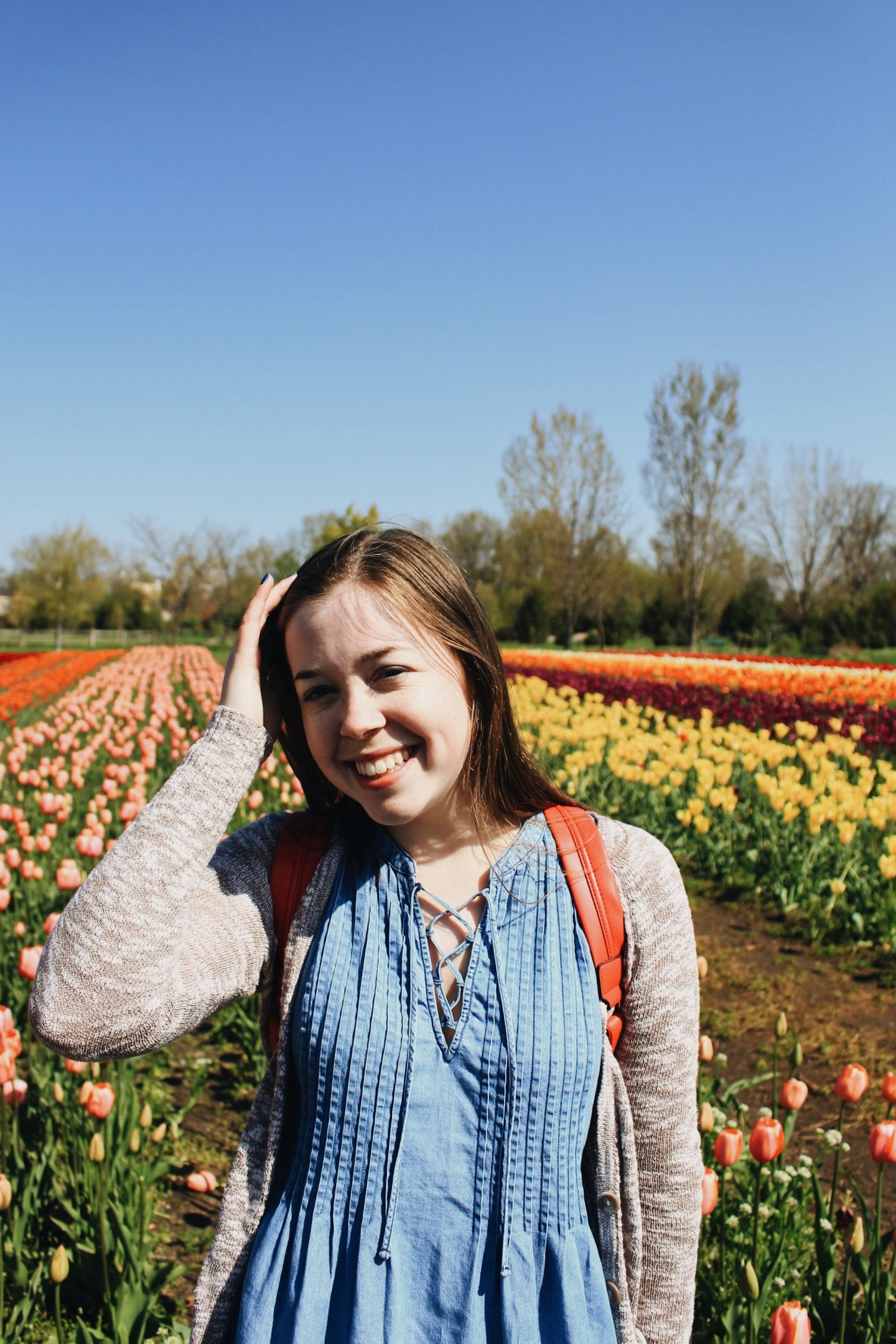 Holland Tulips Photo Diary