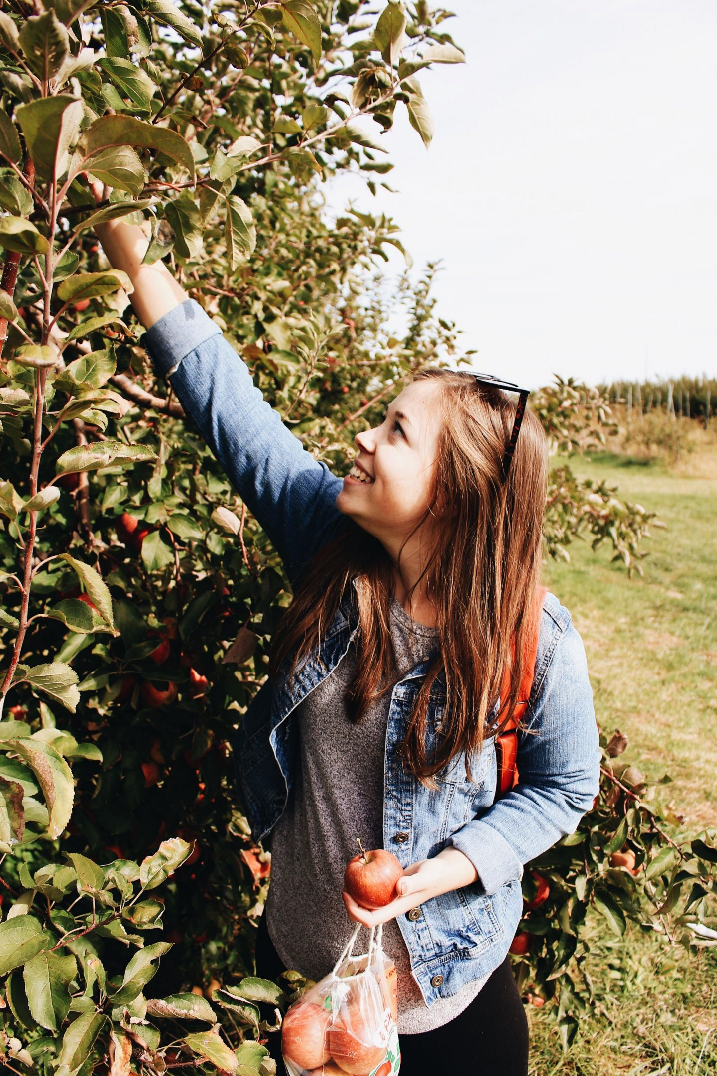 An Afternoon of Apple Picking